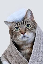 Image result for Bathing cats