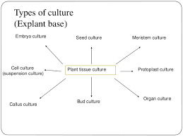 Tissue Culture Flow Chart 46 Thorough Plant Tissues Flowchart