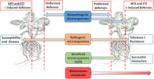 Plant Nutrient Interaction Chart Frontiers The Chemistry Of Plant Microbe Interactions In