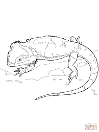 Bearded Dragon Coloring Page From Water