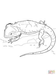 Bearded Dragon Children S Book Google