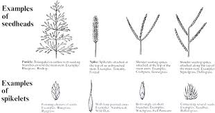 Parts Of A Grass Plant