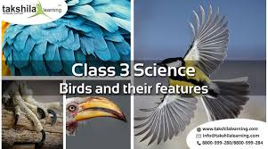 Cbse Class 3 Science Birds And Their Features Notes And Videos