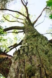Kuvahaun tulos haulle metsäjooga
