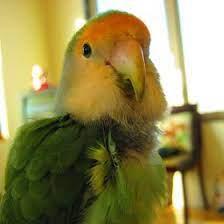 8 Ollie Bird (Fly High and Free) 10/2005- 01/2013 ideas | ollie, bird, diy  bird toys