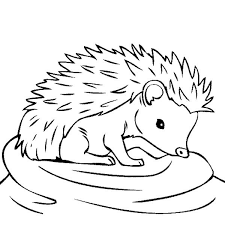 Small Picture Baby Hedgehog Feeling Thirsty Coloring Pages Bulk Color