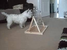 Resultado de imagem para Aqui você tem algumas ideias para fazer brinquedos caseiros para cães