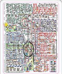 Metabolic Pathways Chart A Metabolic Chart Of The Pathways Of Intermediary Metabolism