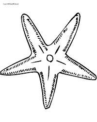 Small Picture Printable 36 Starfish Coloring Pages 8707 Starfish Coloring