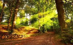 Desktop For Summer Forest Background Nature Hd Wallpaper Pics Iphone