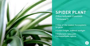 plants office garden green clean air indoor. perfect air spider plant intended plants office garden green clean air indoor t
