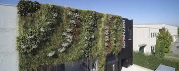 green wall sfumatura