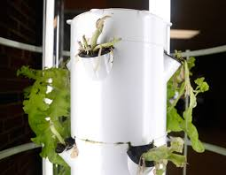 the aeroponic tower garden sits in fairview elementary school