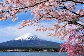 Bunga Sakura 10 Fakta Menarik Tentang Hanami Festival Bunga Sakura Di Jepang