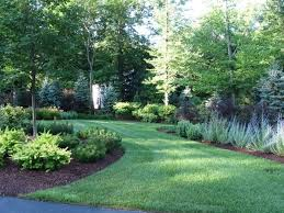 Privacy Trees For Backyard  Outdoor GoodsGood Trees For Backyard