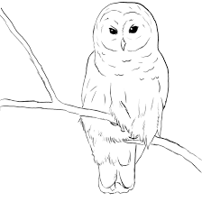 Small Picture Free Printable Owl Coloring Pages For Kids Animal Place