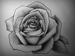 Small Picture Drawn rose hard Pencil and in color drawn rose hard