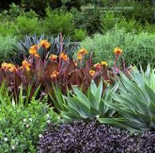 Small Picture nz tropical garden Google Search Garden Pinterest Canna