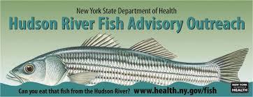 Hudson River Sloop Clearwater Eating Hudson River Fish