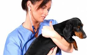 Veterinarian Technician Salary Veterinary Technician Salary Healthcare Salary World