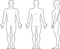 Medical Human Body Outline Drawing At Paintingvalley Com