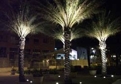 outdoor tree lighting ideas. Lighting Palm Trees Outdoor Tree Ideas H