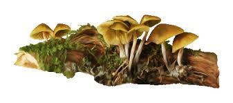 Znalezione obrazy dla zapytania grzyby-gify
