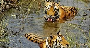 Image result for Tadoba National Park