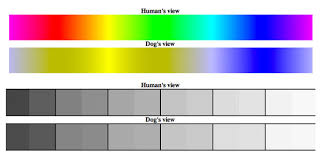 Dog Color Chart See What The World Looks Like To A Dog American Kennel Club