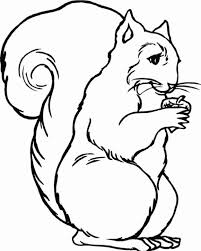 Small Picture Printable Animal Squirrel Coloring Pages Animal Coloring pages