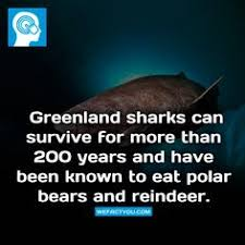 greenland sharks can survive for more than years and have been greenland sharks can survive for more than 200 years and have been known to eat polar bears and reindeer fact did you know reindeer facts