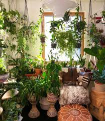 Interior Design Plants Inside House Gorgeous Room Room With Plants Plant Decor Plants