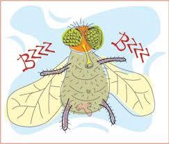 Resultado de imagen de la mosca sabia