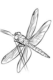 Small Picture 294 best butterflies dragonflies patterns images on Pinterest