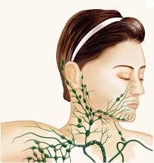 lymph nodes swollen lymph nodes la