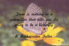 Butterfly Quotes Extraordinary Butterfly Quotes
