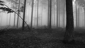 black and white nature wallpaper. Unique Nature Nature Trees Fog Wallpaper HD Inside Black And White Wallpaper A
