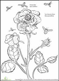 worksheets rose and bee coloring page