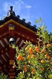 Tachibana orange