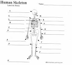 outline blank pelvic diagram all about repair and wiring collections outline blank pelvic diagram outline blank pelvic diagram empty skeleton diagram ear muscle diagram labeled