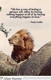 Humorous Inspirational Quotes Mesmerizing Inspirational Quotes Quote Of The Day Funny Pictures Quotes