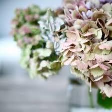 <b>Green</b> & Gorgeous - <b>Plant</b> portraits & <b>Wedding</b> Floral <b>Headband</b> ...