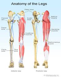 Nerve Chart Leg Leg Pain Symptoms Treatments Causes
