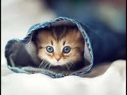 """Résultat de recherche d'images pour """"image de petit chat mignon"""""""