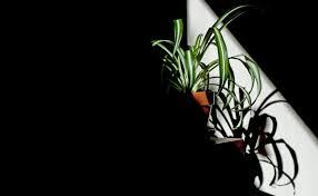 Welche Pflanzen Sind Für Das Schlafzimmer Geeignet Everyday Feng Shui
