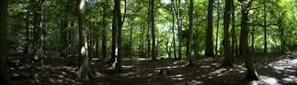 Resultado de imagen de Tree protection agencies