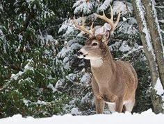 292 Best Hunting Big Game Images In 2019 Deer Hunting