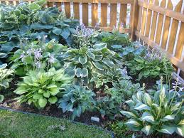 Small Picture Landscaping Ideas With Hostas Greatindex Net Hosta Flower Garden