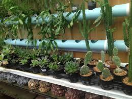 Small Picture Garden Design Garden Design With Indoor Cactus Garden Ideas