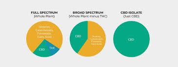 Cbd Chart Full Spectrum Cbd Vs Broad Spectrum Cbd Vs Cbd Isolate
